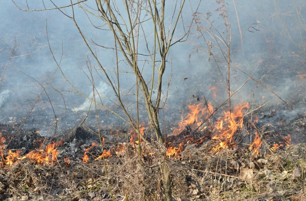 Неподалік від траси, що з'єднує Ужгород і Мукачево, палав вогонь