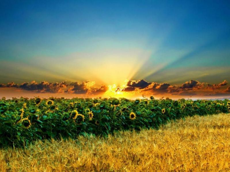 Аграріїв Закарпаття привітали з професійним святом