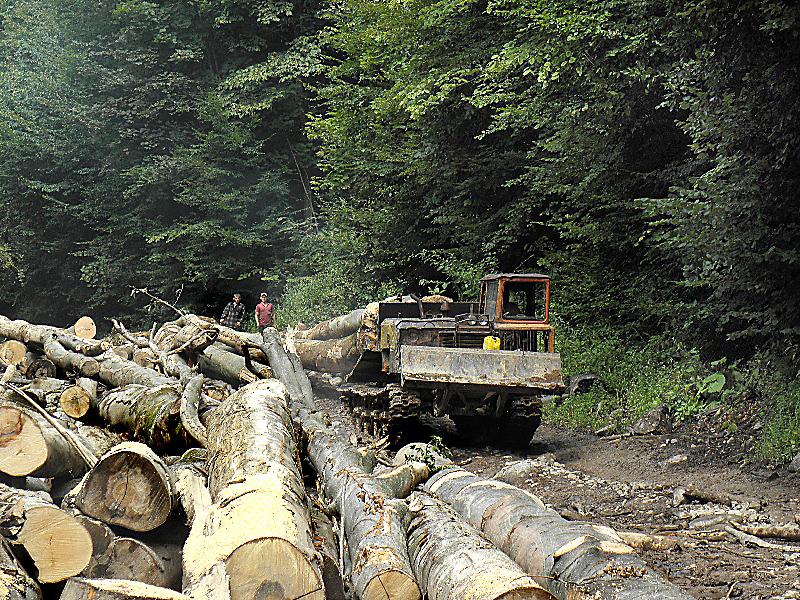 Депутати заборонили заготівлю лісу у санітарних водоохоронних зонах Воловеччини