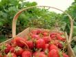 У Хусті покупці нарікають на високі ціни на ранні овочі та фрукти