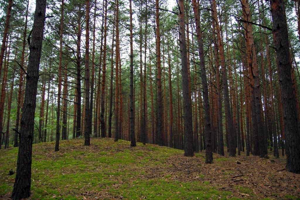 Через незаконно надану лісогосподарську землю на Тячівщині, прокуратура відкрила кримінальну справу