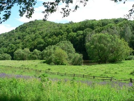 Лісові ресурси Закарпаття принесли краю 22 мільйони гривень прибутку