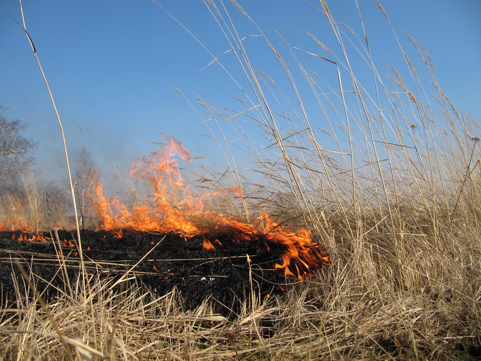 Попри усі заборони та застереження, на Прикарпатті продовжують масово підпалювати суху траву
