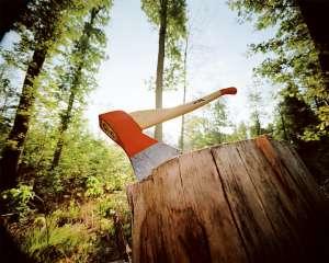 Службовці Тячівського лісництва дозволили незаконно вирубувати лісові дерева