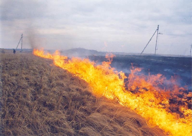 На Пряшівській у Мукачеві вигоріло 2 гектари трави, чагарників та відходів деревини