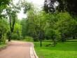 В Ужгороді рубають столітні дерева, – очевидець