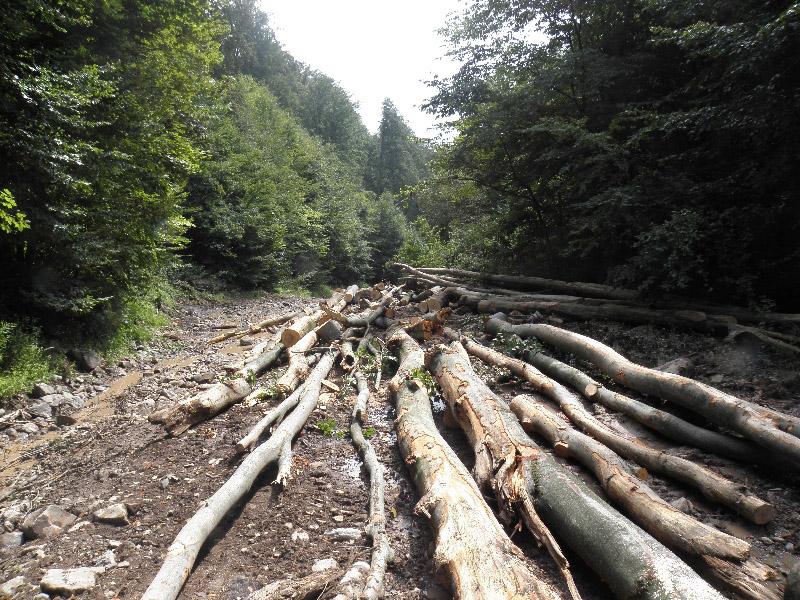 Закарпатські ліси постраждали на 62 тисячі гривень