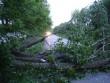 У Берегові дерево перекрило дорогу