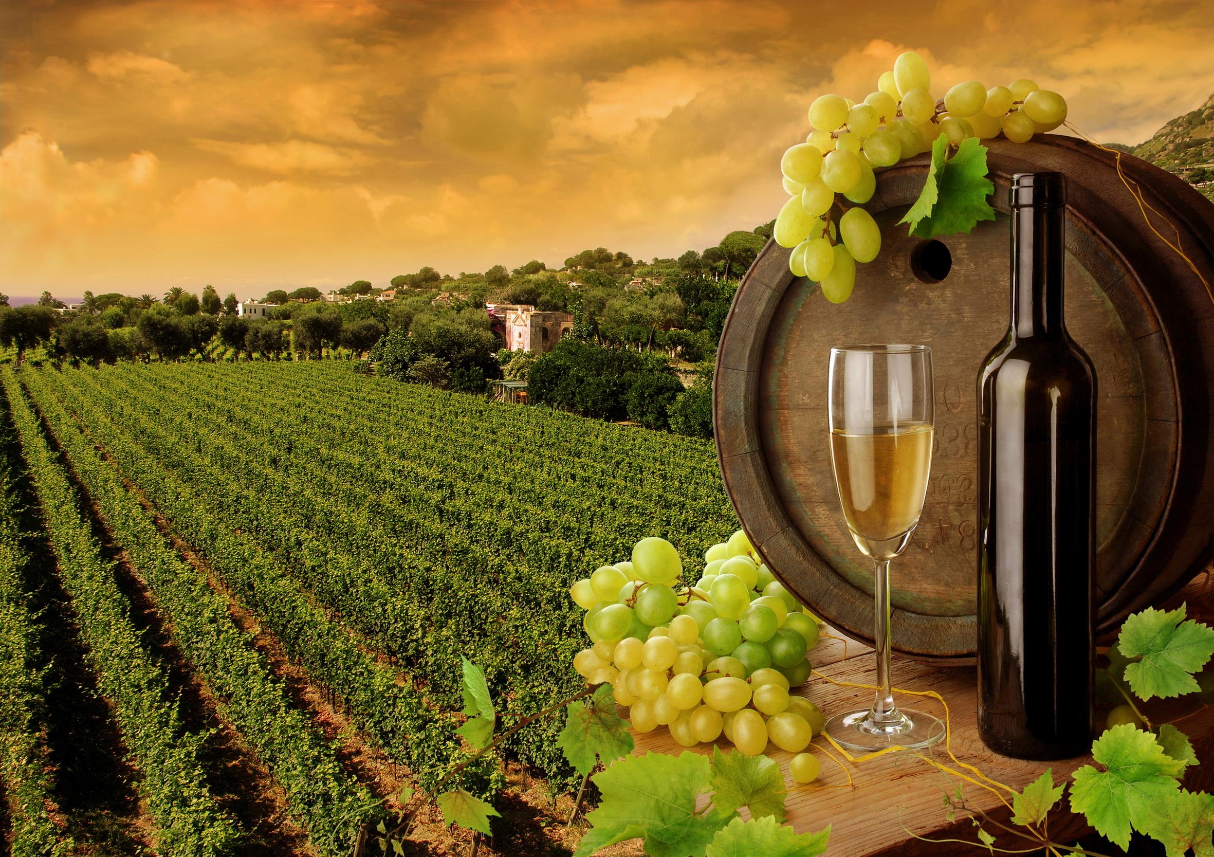 Геннадій Москаль хоче віддати в приватизацію збанкрутілі виноробні підприємства Закарпаття