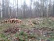 На Іршавщині люди масово почали вирубку лісів