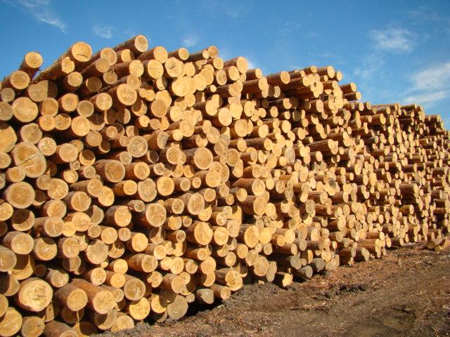 Голова Закарпатської ОДА заборонив вивозити із Закарпаття за кордон ліс-кругляк