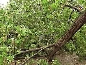 Дерево впало на дорогу у Хусті