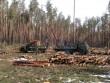 Прокуратура розпочала кримінальне провадження за фактом незаконної вирубки лісу на Берегівщині