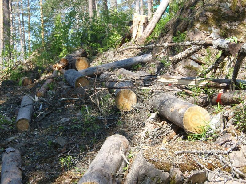 Берегівські правоохоронці перевірили законність вирубки лісів на території району