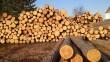 В області офіційно припинили видачу сертифікатів на експорт лісу-кругляка
