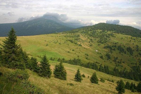 В Ужанському національному парку горіла лісова підстилка