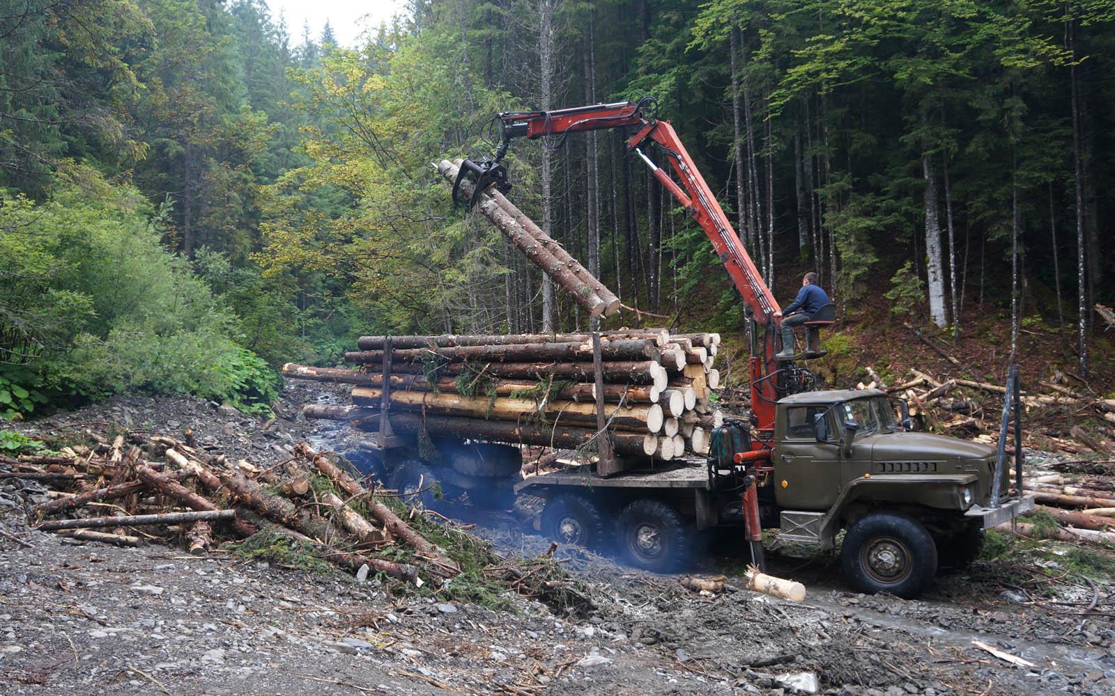 Прокуратура вимагає відшкодувати державі 225 тис. грн шкоди заподіяної при лісозаготівельних роботах