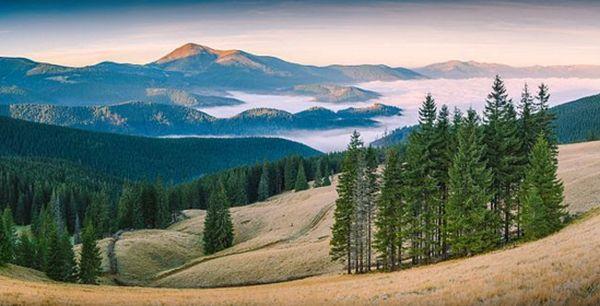 """У десятку кращих фото світу """"Вікі любить Землю"""" увійшло фото Карпатського біосферного заповідника"""
