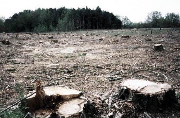 Неналежна охорона одним із лісогосподарських підприємств області призвела до вирубки дерев