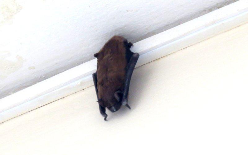 У коридорах Закарпатської ОДА людей лякають кажани