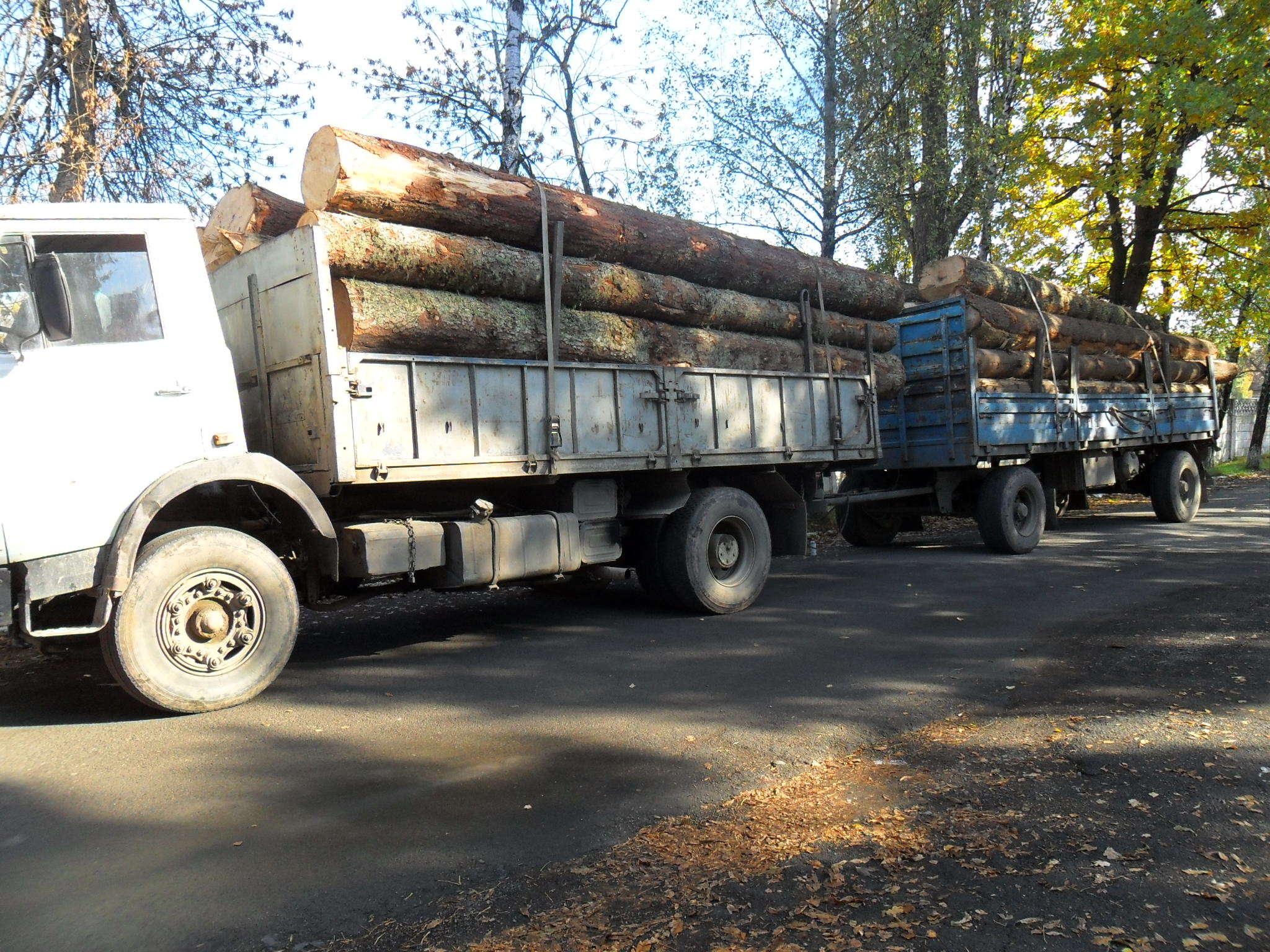 Обласні правоохоронці затримували вантажівки з незаконною деревиною