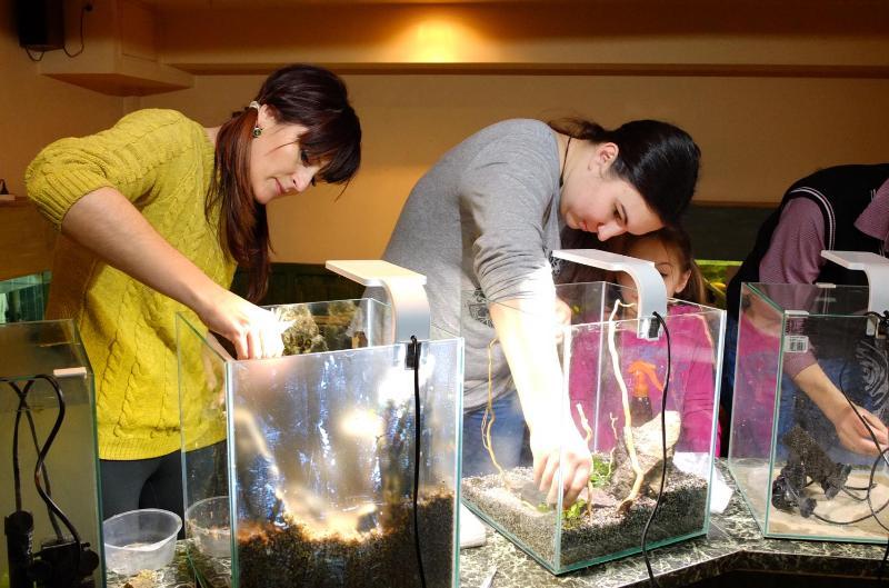 В Ужгороді відбудеться виставка нано-акваріумів