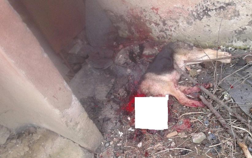 Поліція Ужгорода відпустила чоловіка, який на очах у людей вбив собаку