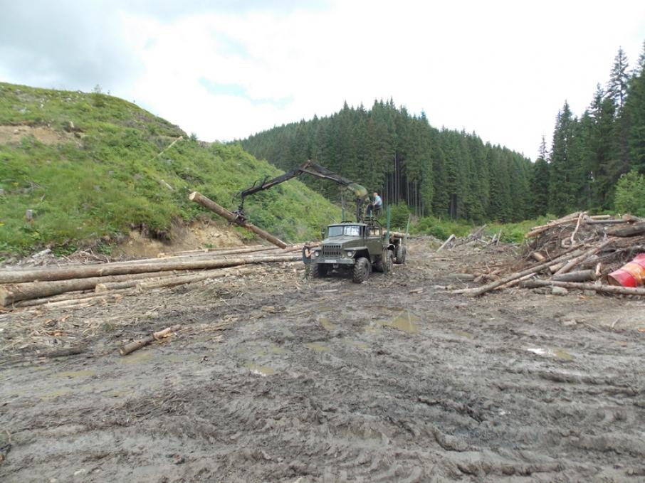 Незаконна вирубка лісів Закарпаття сягнула критичної межі