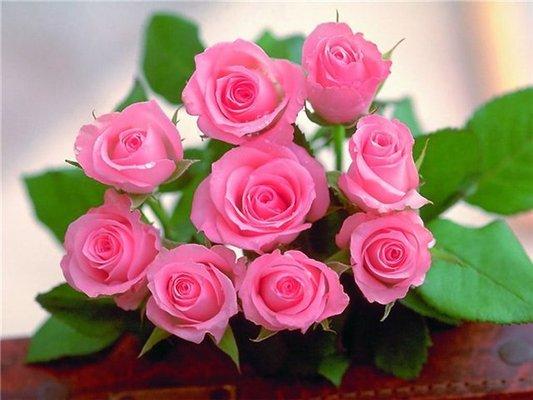 В Ужгороді висаджують троянди