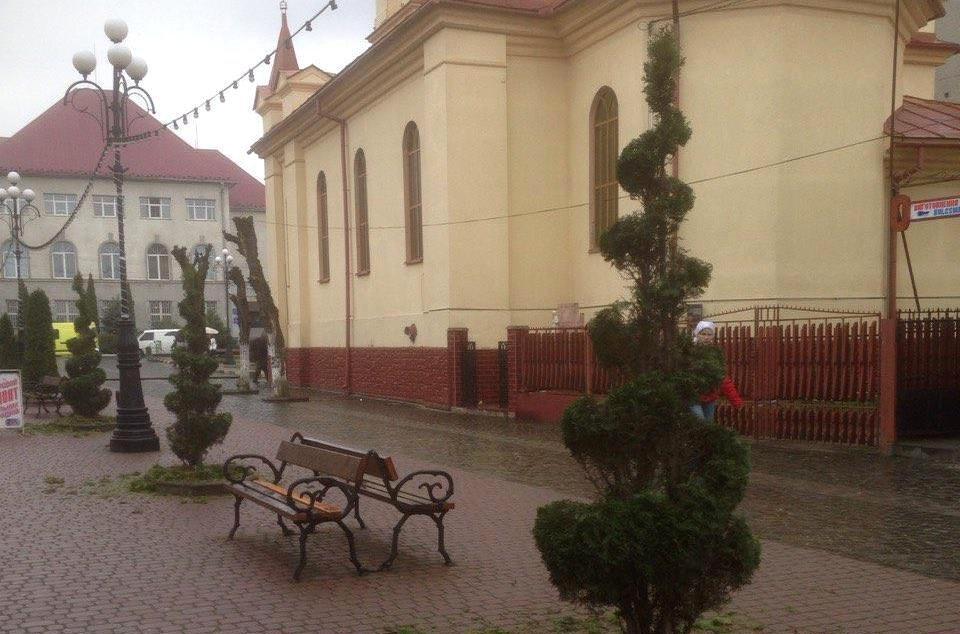 Деревцям туї у центрі Тячева надали оригінального вигляду