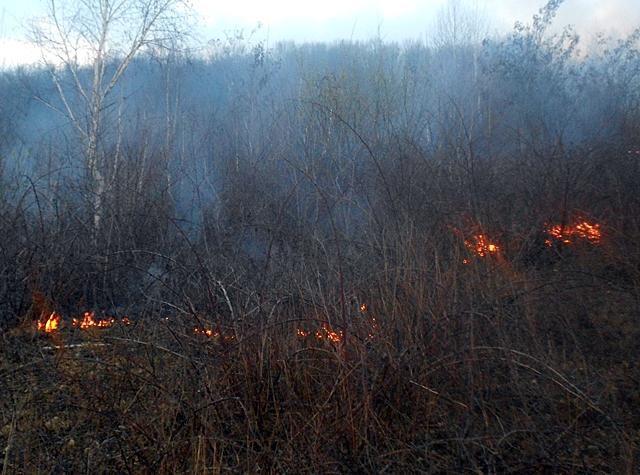 Закарпатці продовжують масово спалювати суху траву й сміття
