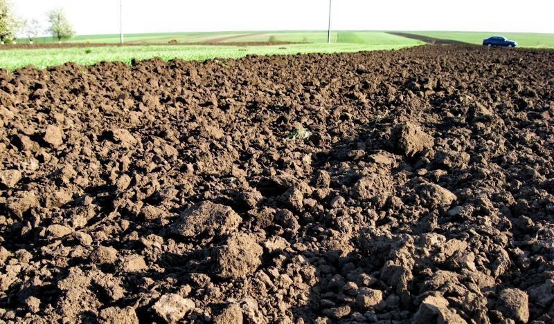 Чиновники незаконно дали фермеру в оренду ділянку площею понад 1 гектар