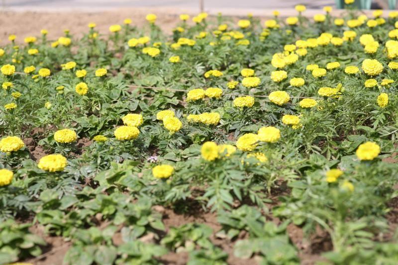 Богдан Андріїв попросив ужгородців не красти квіти з міських клумб