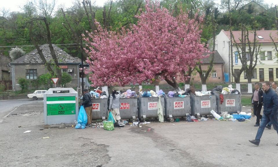 """Краса і потворність! На """"Перечинському"""" автовокзалі в Ужгороді над сміттєвими баками зацвіла сакура"""