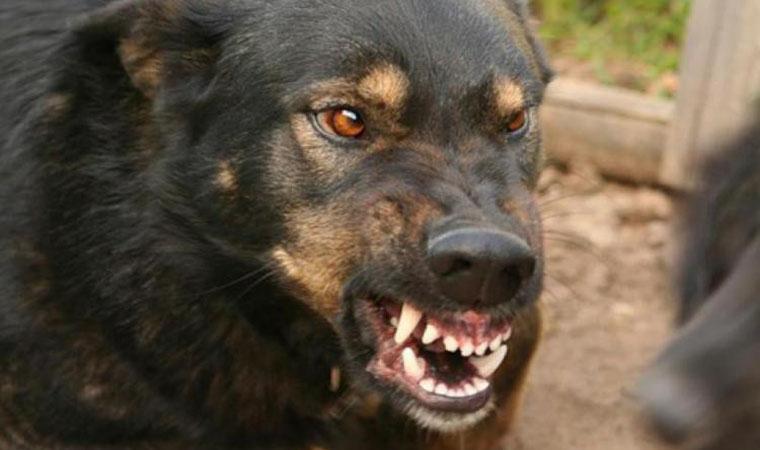 В Ужгороді нетверезий хуліган натравив пса на дітей та поліцейських