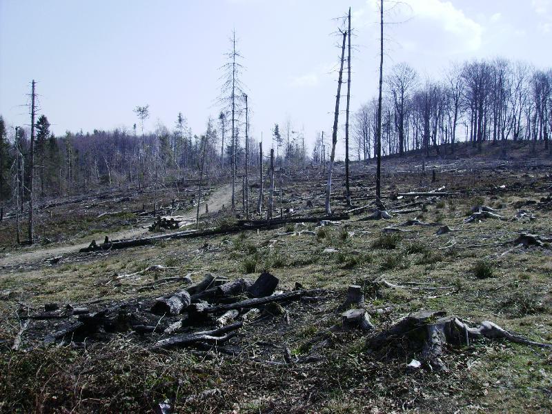 Незаконна вирубка лісів на Закарпатті: скільки прокуратура відкрила кримінальних справ