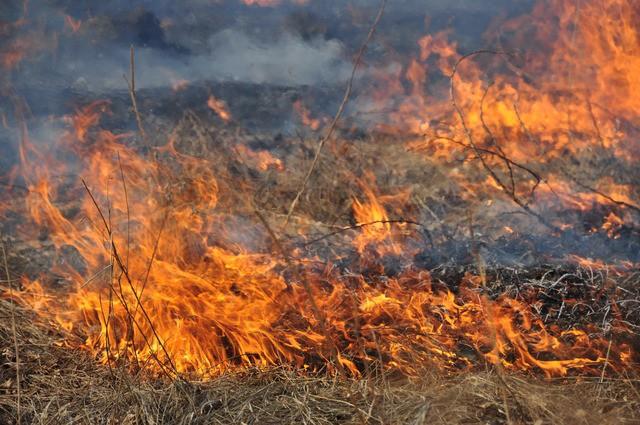 На Виноградівщині горіли чагарники