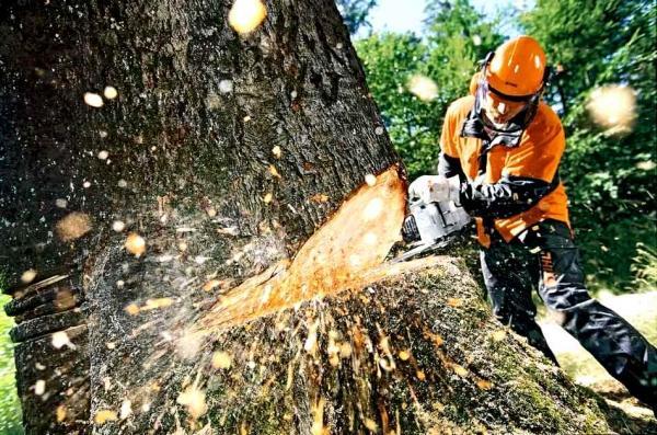 Ужанський національний природний парк оштрафований за незаконну рубку дерев