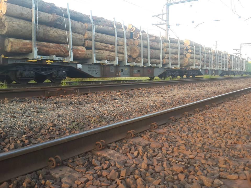 Прокуратура перевірить 22 вагони із лісом, затримані митниками у Чопі