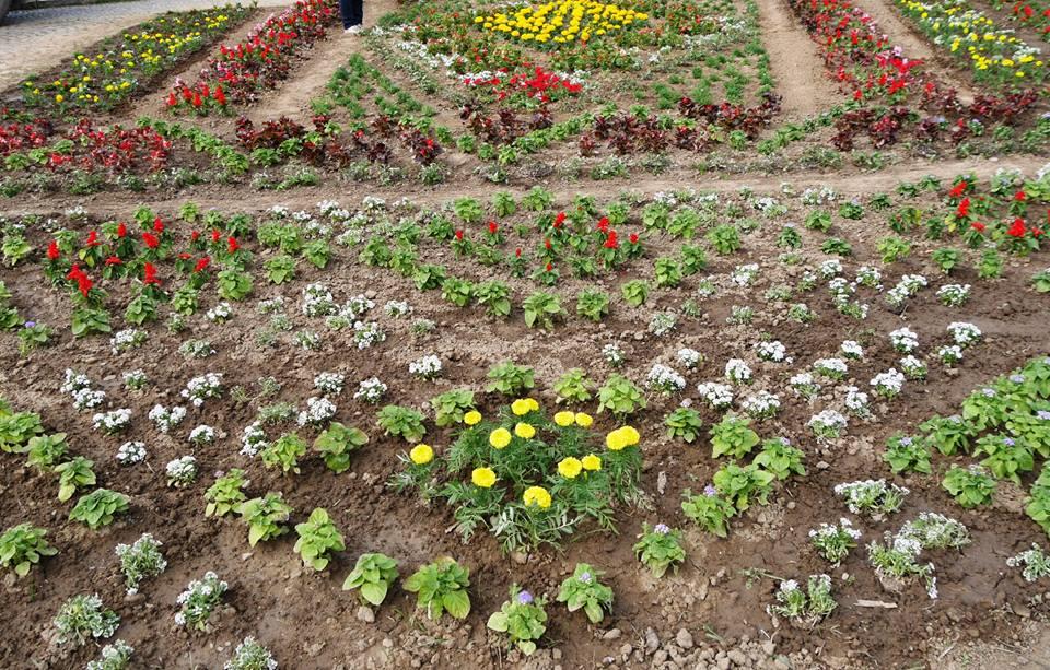Біля Закарпатської ОДА завершують творити квіткову вишиванку