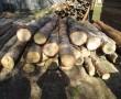 На Мукачівщині затримали трьох браконьєрів, які крали ліс