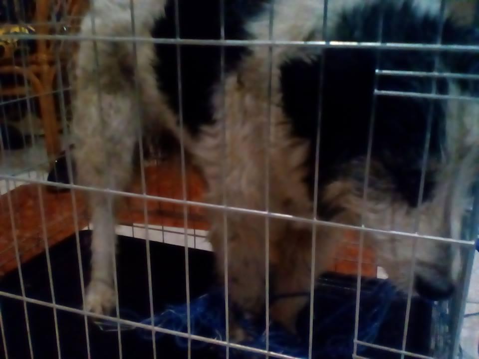 Мукачівські патрульні врятували життя травмованої собаки