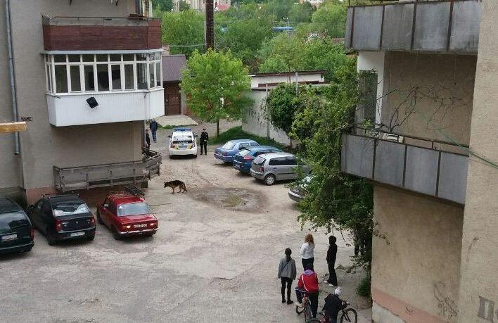 Вівчарка покусала на одній із вулиць Ужгорода кілька собак та напала на двох людей