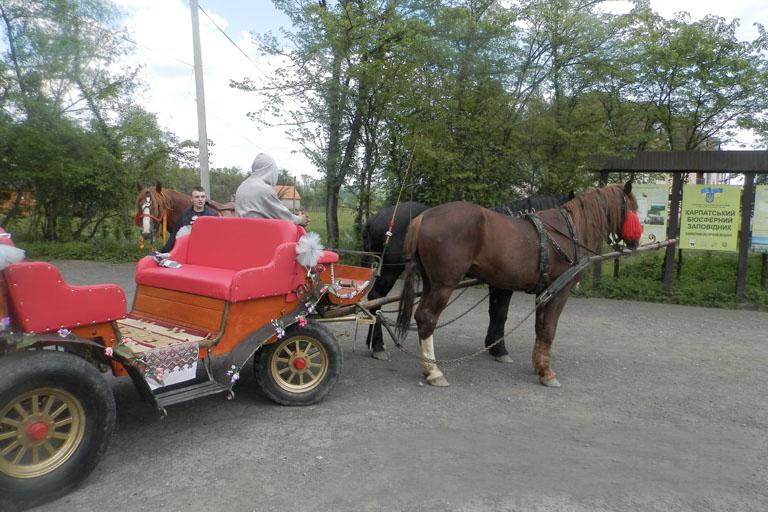 Туристів у Долині нарцисів розважають поїздками на конях, у планах – запустити велосипедний маршрут