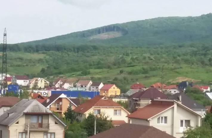 Люди обурені вирізкою дерев на Червоній горі біля Мукачева
