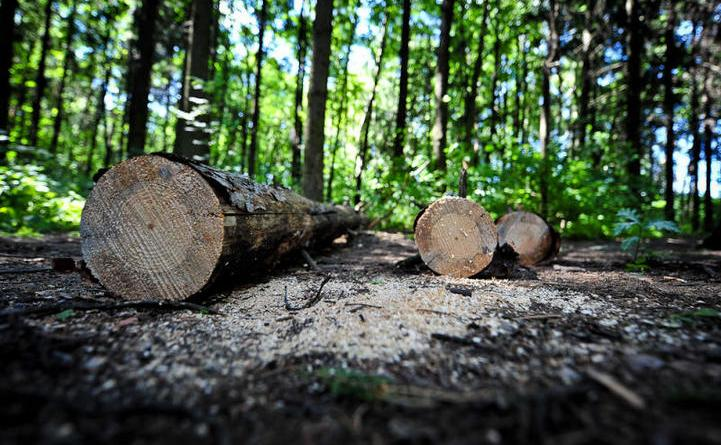 На Хустщині дерево вбило чоловіка