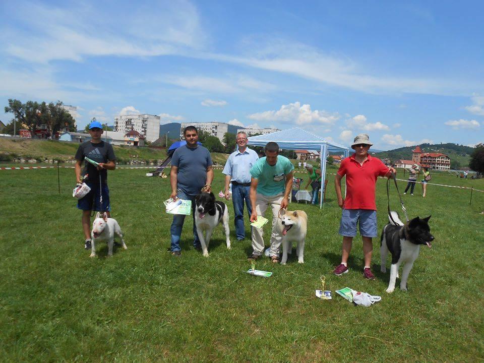 На міському пляжі Мукачева відбулась виставка собак