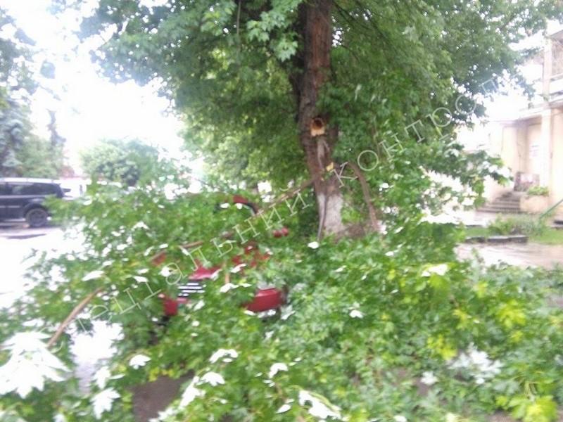 В Ужгороді на автомобіль впала гілка з дерева