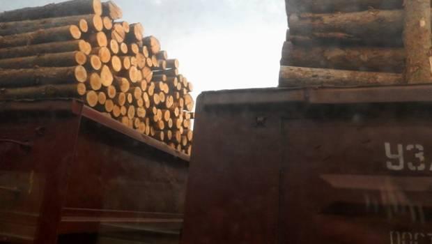 Москаль просить прем'єр-міністра України відкликати із Закарпаття вагони з «паливною деревиною»