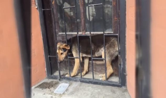 У Берегові перехожі врятували собаку над якою познущались невідомі